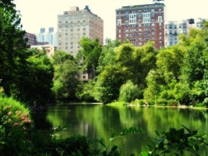 2_SaveSpendSplurge_Mochimac_Photograph-New-York-City-Central-Park