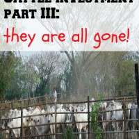 Cattle investment part III: they are all gone!