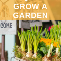 Step 17: Grow a garden. This post is part of a 30 days series called the 30 steps program to financial independence. You can check the list of other posts here. #financialindependence #frugallivingtips #frugal