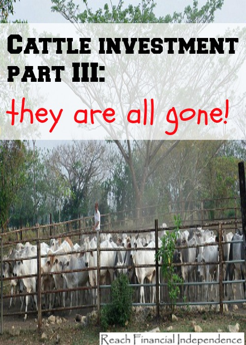 Cattle investment part
