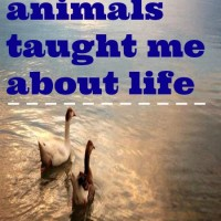 What the animals taught me about life