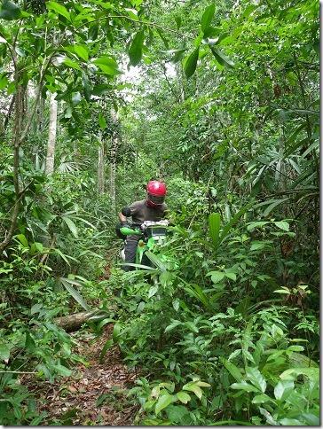 yaxha jungle